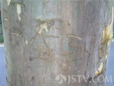 武汉新冠肺炎肺炎疫情动态性(今年 6月13日)