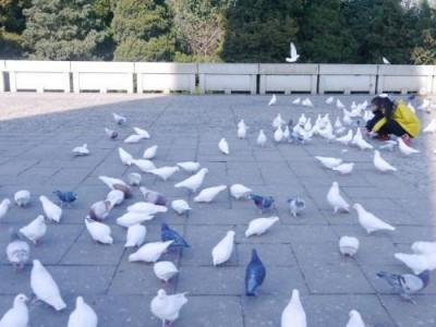 清华大学、北京大学一批号招生人数在鄂有提升,清华大学增9人,北暴增20人
