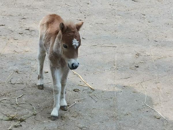 """22日,武汉动物园的动物们要""""复工""""了!3个月不见,小麋鹿小矮马等动物宝宝相继出生 第2张"""