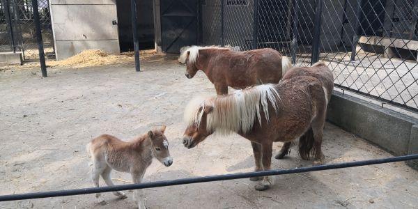 """22日,武汉动物园的动物们要""""复工""""了!3个月不见,小麋鹿小矮马等动物宝宝相继出生 第3张"""