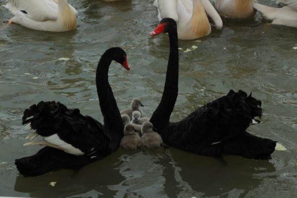 """22日,武汉动物园的动物们要""""复工""""了!3个月不见,小麋鹿小矮马等动物宝宝相继出生 第4张"""