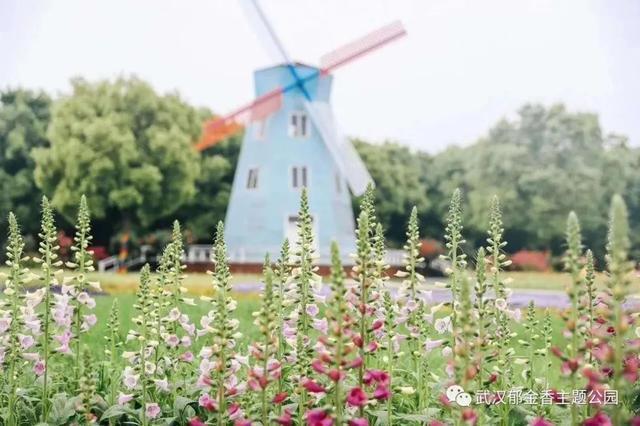 Hi~好久不见,武汉这些景点、公园陆续开放 第5张