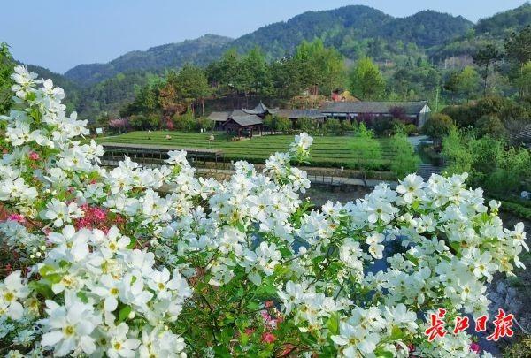 """""""五一""""武汉有序开放这些景区,请牢记""""先预约再旅游"""" 第3张"""