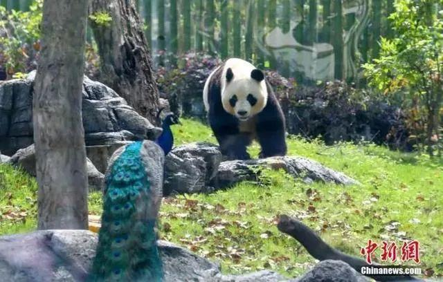 关注|东湖游船新增两条路线,武汉动物园的快艇、游览车恢复开放 第2张