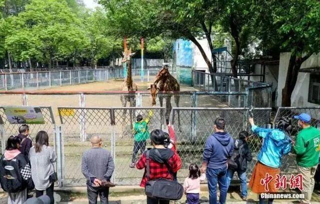 关注|东湖游船新增两条路线,武汉动物园的快艇、游览车恢复开放 第3张