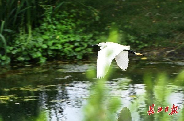 生态公园白鹭飞|标准图集 第1张