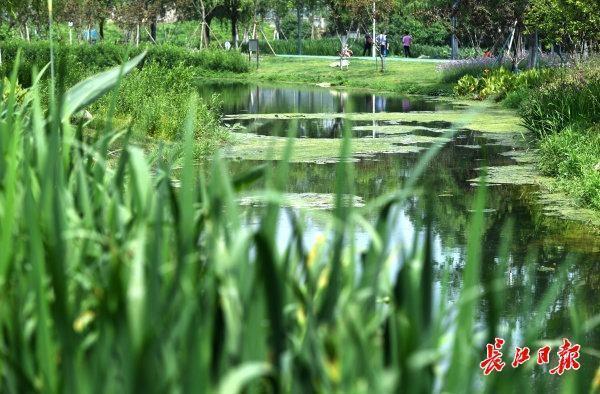 生态公园白鹭飞|标准图集 第5张
