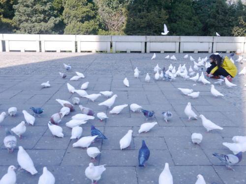 清华大学、北京大学一批号招生人数在鄂有提升,清华大学增9人,北暴增20人 第1张