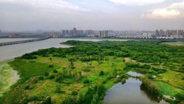 """关心 政府部门转让133亩商住用地调规为绿色生态绿化,大城市空出一片""""绿"""" 第2张"""