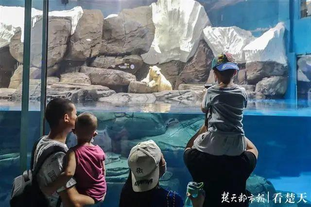聚焦点|湖北省武汉景区免费参观当日人气值超旺!旅游景区服务项目防治抓牢 第21张