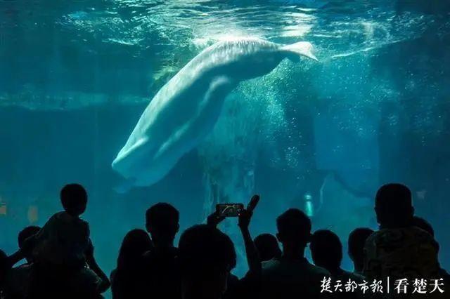 聚焦点|湖北省武汉景区免费参观当日人气值超旺!旅游景区服务项目防治抓牢 第22张