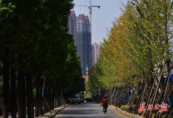 湖北省多地刚开始下秋风秋雨,武汉市依然午后阳光 第1张