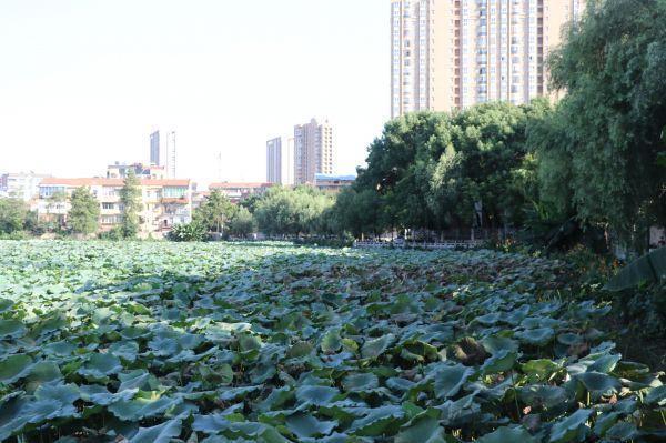 巡查组督查,莲花湖沿岸地区年之内将再现翠绿色围绕 第1张