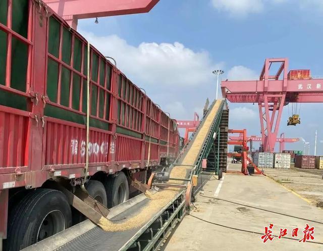 """阳逻港启动了粮食""""散改""""水路运输,首批大米运费可节省四分之一 第2张"""