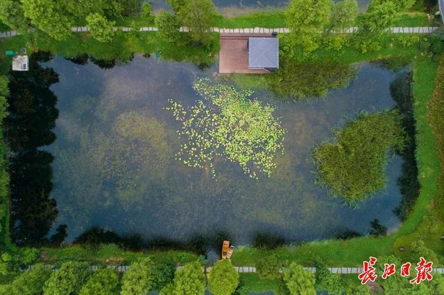 """谈论东湖水管理,40万网友观看""""东湖文明之星讲堂"""" 第1张"""