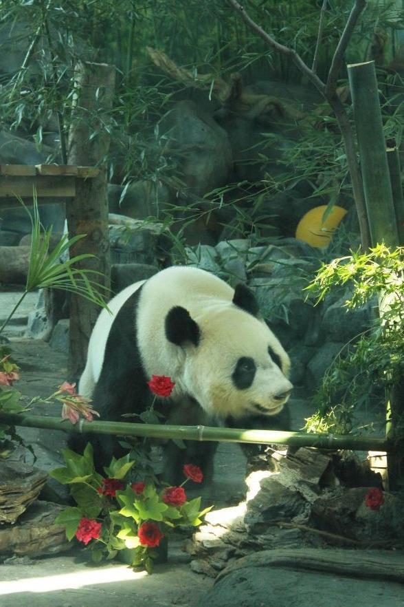 调整国家重点保护野生动物名单,长江江豚升级为一级保护动物 第3张