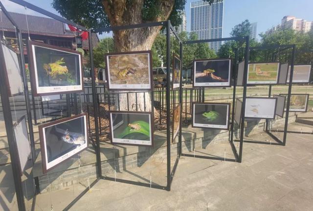 """每个房子都是打卡点!武汉的主要公园都很""""有名"""" 第12张"""