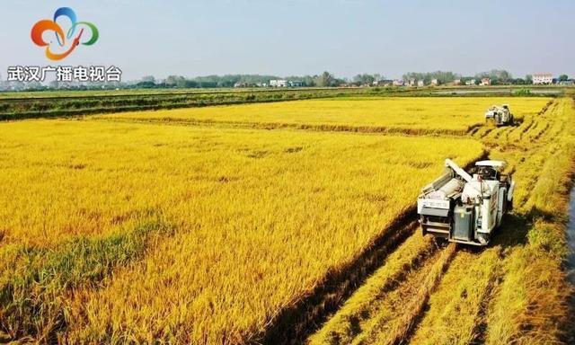 民生|武汉粮食企业放开农民余粮收购,确保种粮农民持续增收 第3张