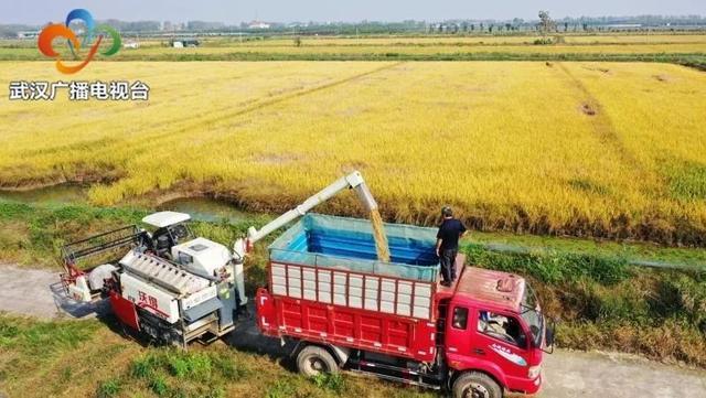 民生|武汉粮食企业放开农民余粮收购,确保种粮农民持续增收 第2张