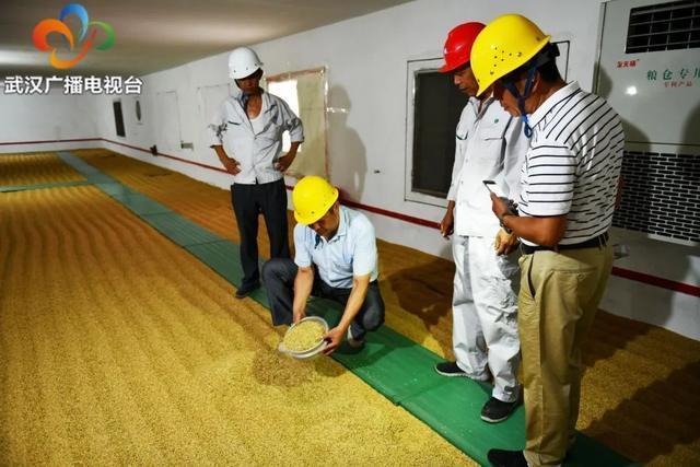 民生|武汉粮食企业放开农民余粮收购,确保种粮农民持续增收 第7张
