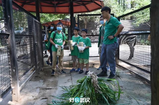 在半个城市收集了35年的儿童乐趣后,现在武汉动物园想听听你的故事 第1张