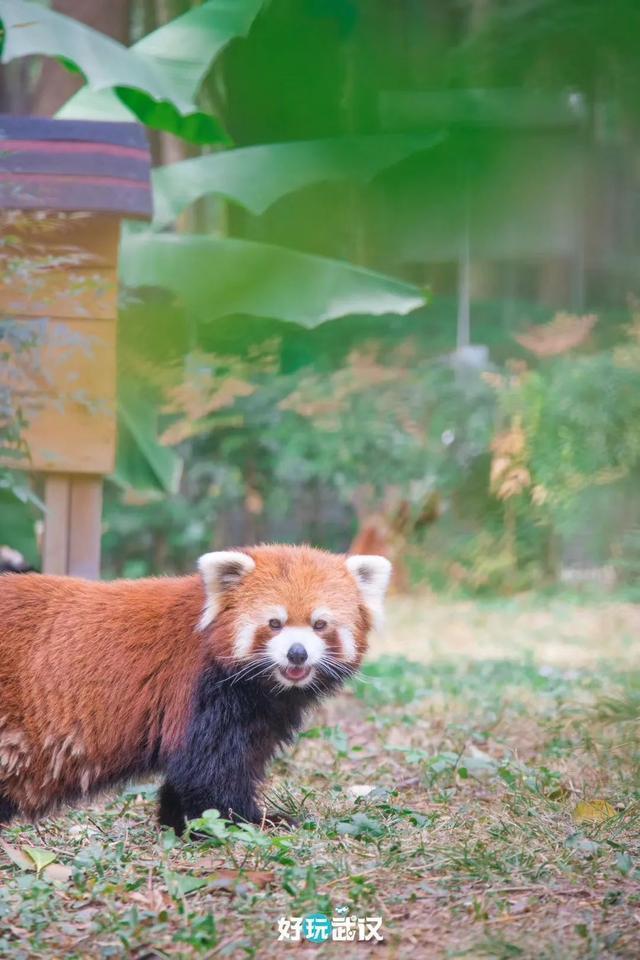 在半个城市收集了35年的儿童乐趣后,现在武汉动物园想听听你的故事 第2张