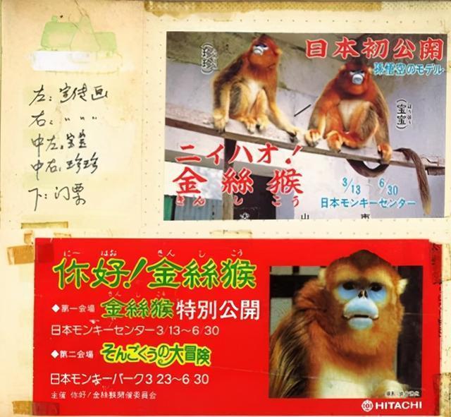 在半个城市收集了35年的儿童乐趣后,现在武汉动物园想听听你的故事 第6张