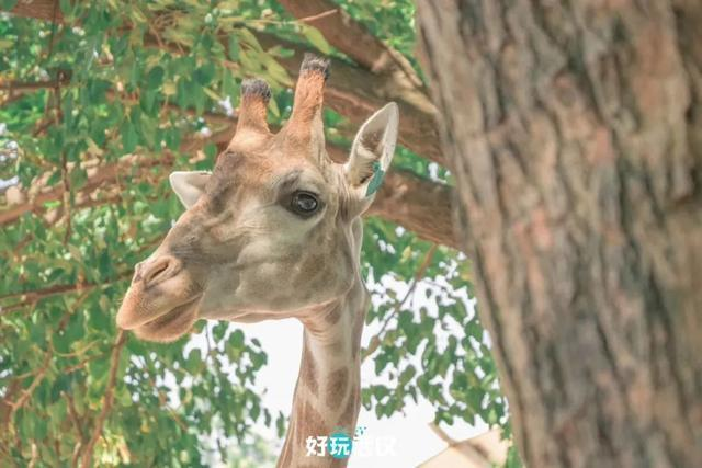 在半个城市收集了35年的儿童乐趣后,现在武汉动物园想听听你的故事 第8张