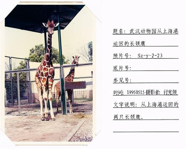 在半个城市收集了35年的儿童乐趣后,现在武汉动物园想听听你的故事 第9张