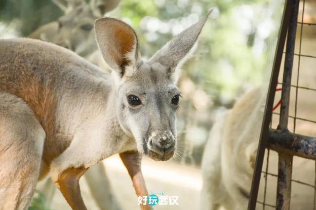 在半个城市收集了35年的儿童乐趣后,现在武汉动物园想听听你的故事 第10张
