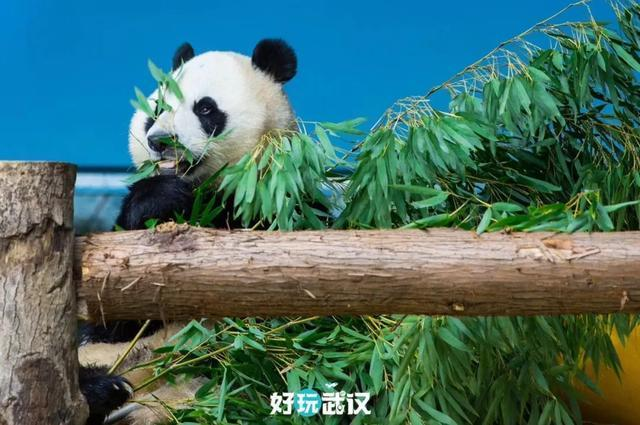 在半个城市收集了35年的儿童乐趣后,现在武汉动物园想听听你的故事 第12张