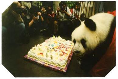 在半个城市收集了35年的儿童乐趣后,现在武汉动物园想听听你的故事 第13张