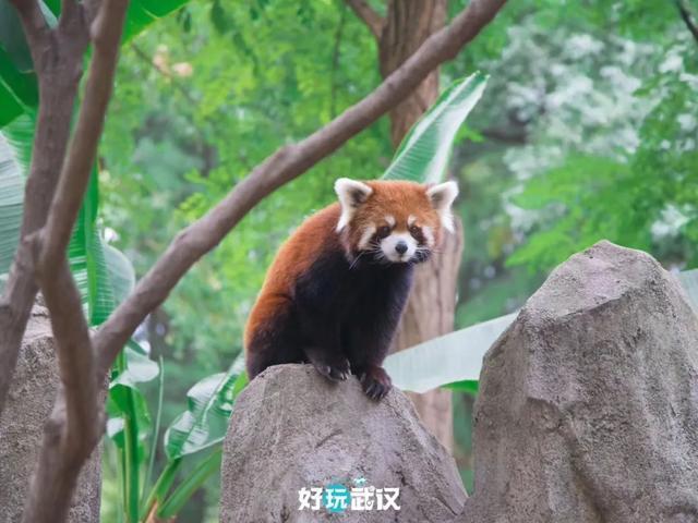 在半个城市收集了35年的儿童乐趣后,现在武汉动物园想听听你的故事 第11张