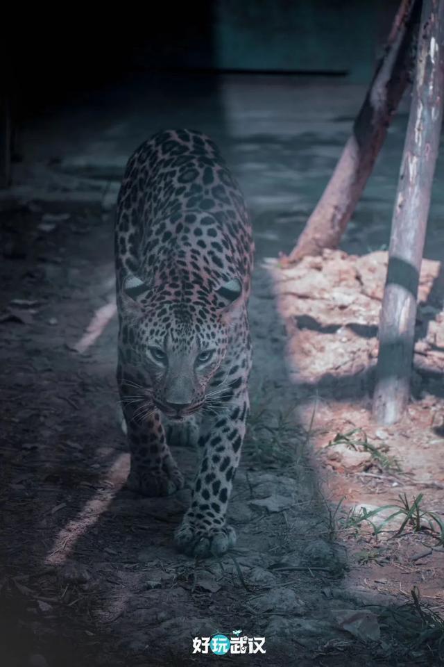 在半个城市收集了35年的儿童乐趣后,现在武汉动物园想听听你的故事 第14张