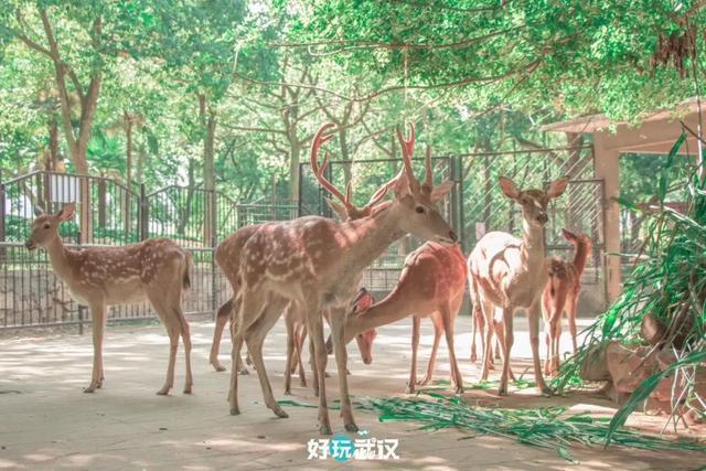 在半个城市收集了35年的儿童乐趣后,现在武汉动物园想听听你的故事 第15张
