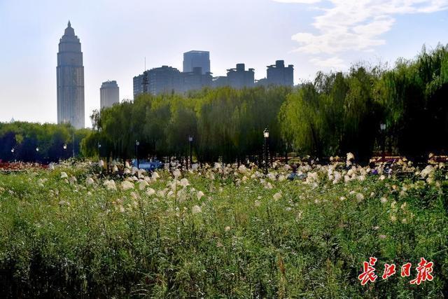 接下来的几天,武汉将会是秋高气爽,早晚凉爽 第1张