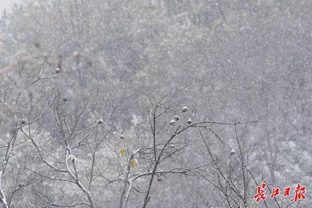 接下来的三天,还是会阴雨连绵,武汉正在过冬。 第1张