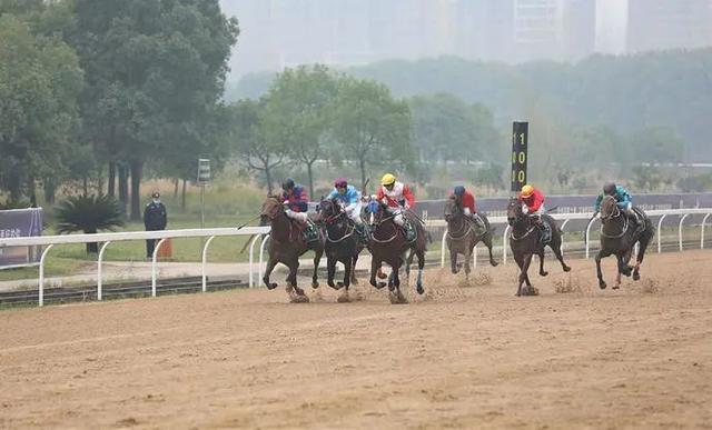 2020中国武汉速度赛马公开赛完美落幕。 第3张