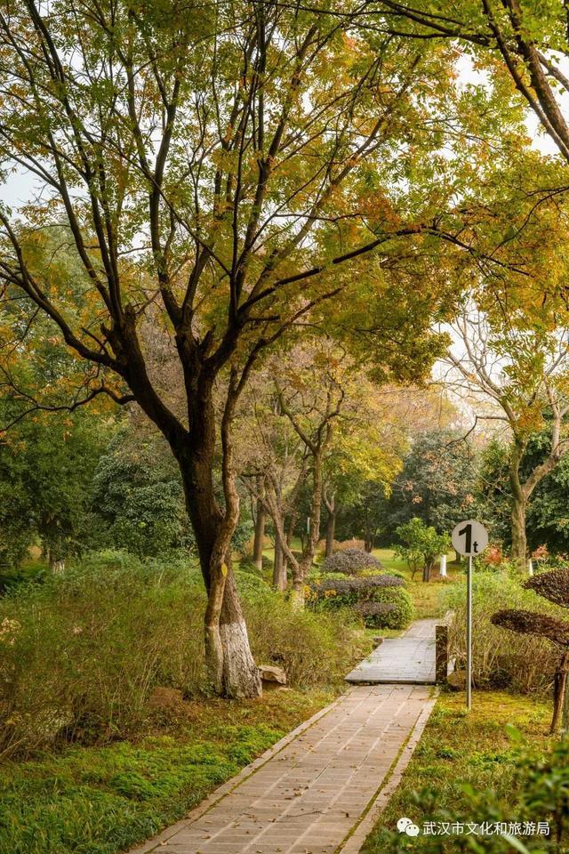 武汉是一个宝藏公园。我不跟TA说普通人的事。 第16张