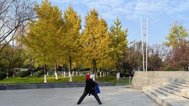 """银杏""""养金"""",为初冬增添色彩。 第2张"""