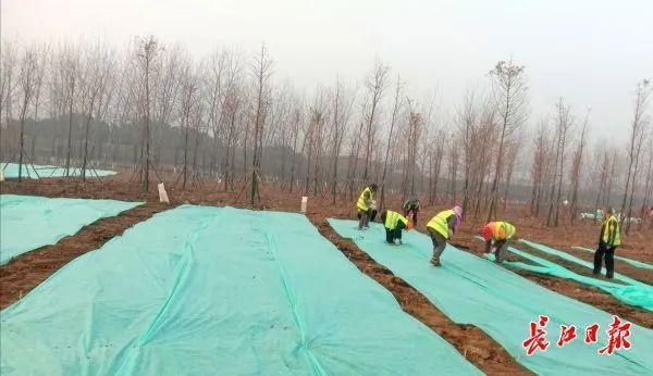 武汉正在调查头绿地和绿化工地进行调查整。 第2张