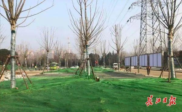 武汉正在调查头绿地和绿化工地进行调查整。 第3张