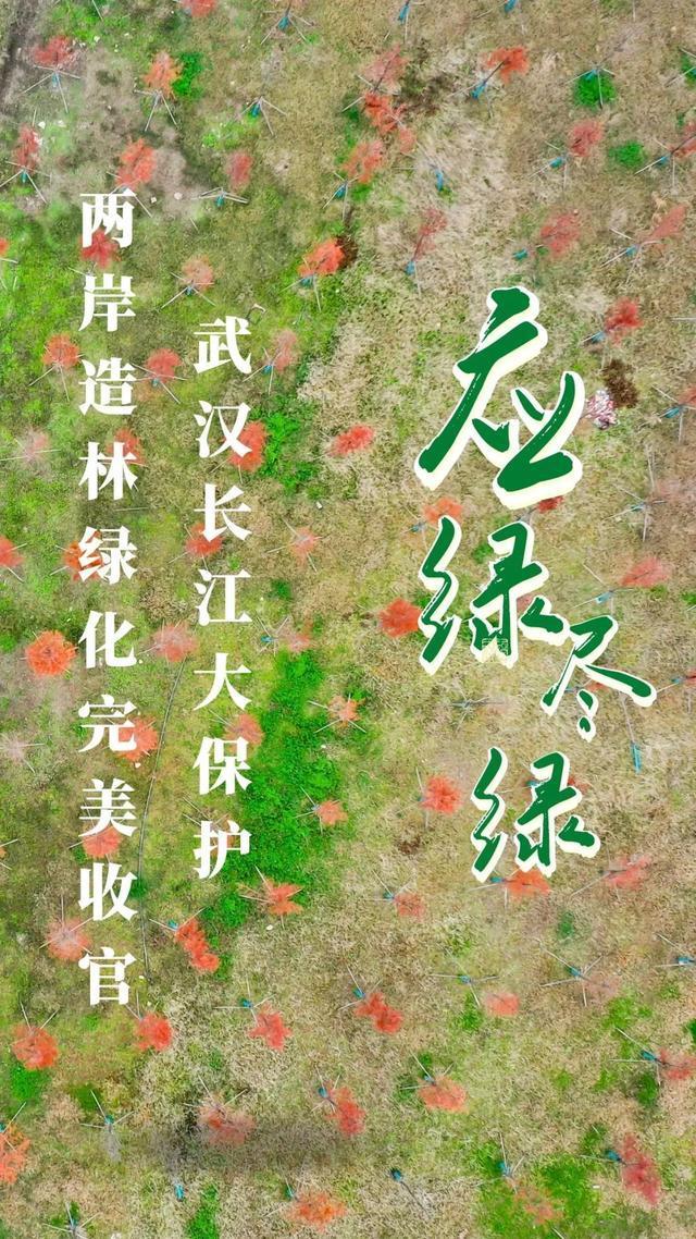 收官!武汉两江四岸成为全景生态绿廊。 第2张