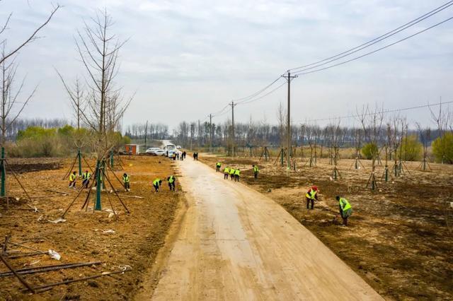 收官!武汉两江四岸成为全景生态绿廊。 第6张