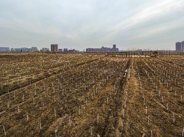 收官!武汉两江四岸成为全景生态绿廊。 第10张
