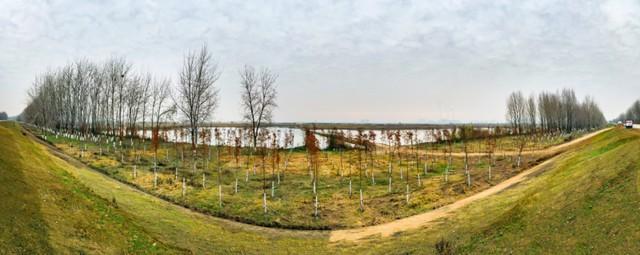收官!武汉两江四岸成为全景生态绿廊。 第11张