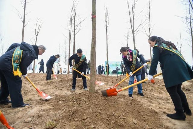 收官!武汉两江四岸成为全景生态绿廊。 第13张