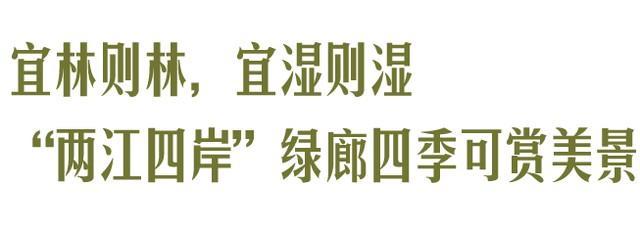 收官!武汉两江四岸成为全景生态绿廊。 第15张