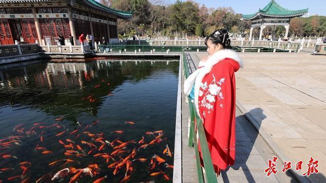 追光、赏梅、观鱼、许愿……你的新年第一天,东湖承包了。 第8张
