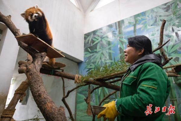 武汉动物园关闭第一周的大象、长颈鹿、熊猫怎么样? 第1张